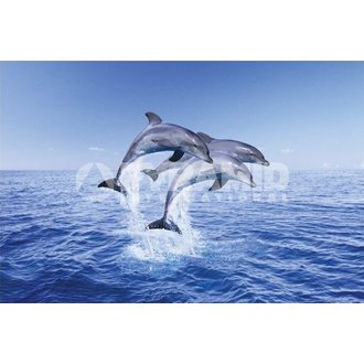plakát Dolphin Trio - Pyramid Posters - PP30267